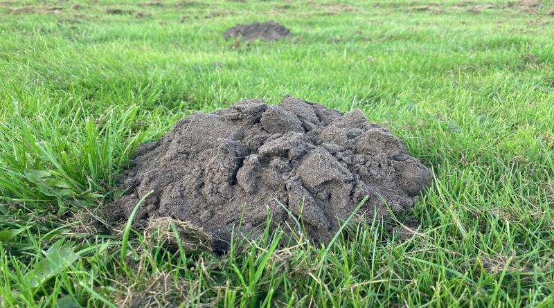 bekæmp muldvarp